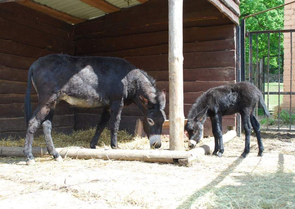 У Рівненському зоопарку з'явилися лелеченята та осля (+фото)